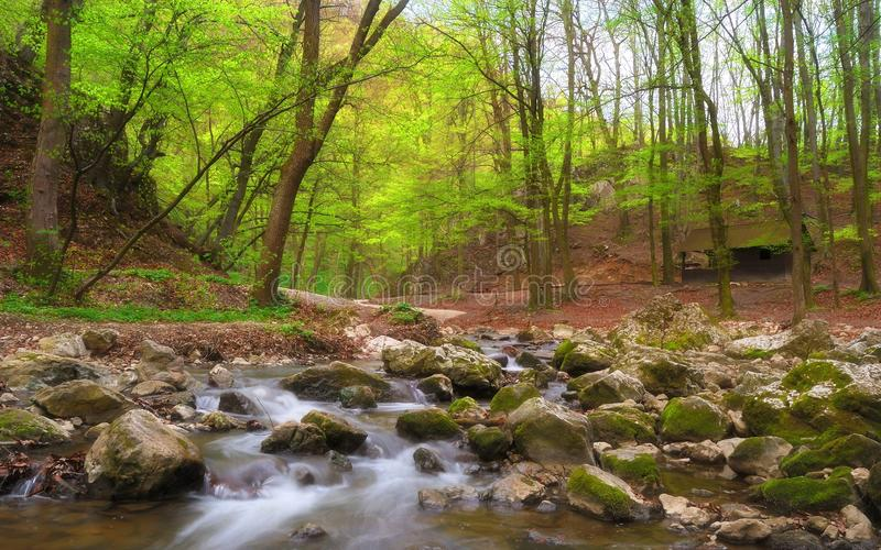 Forest stream, Cuha creek/brook in Bakony Mountains, Hungary stock photos