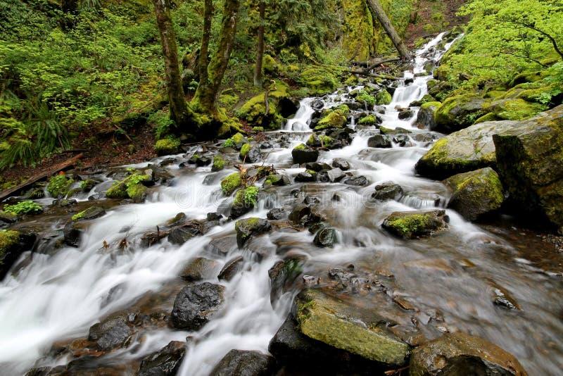 Forest Stream corrente veloce fotografia stock