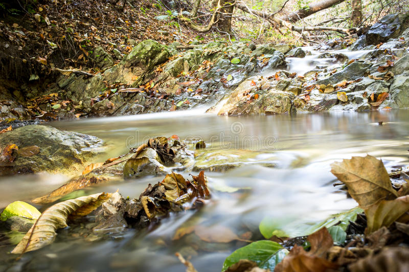 Forest Stream in de Herfst stock afbeeldingen