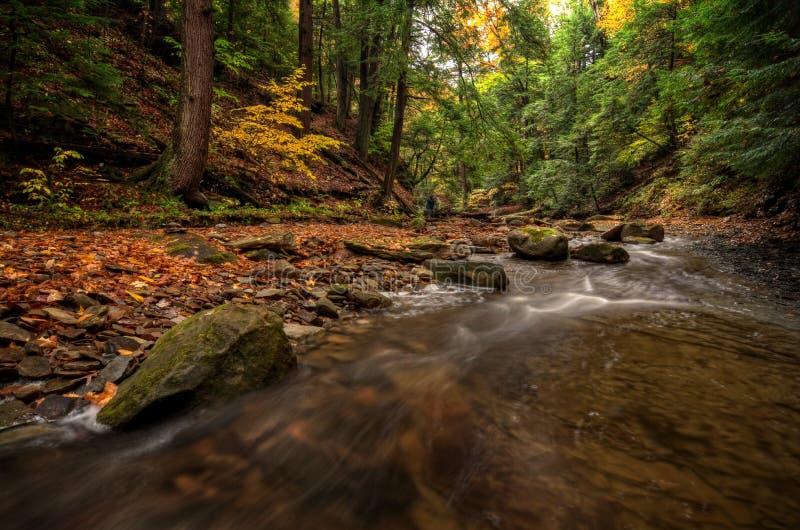 Forest Stream en otoño fotos de archivo