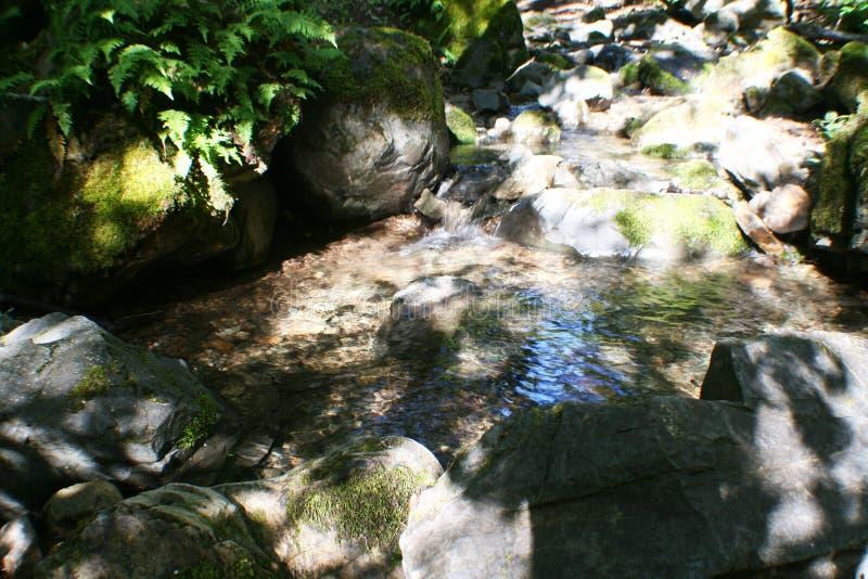 Forest Stream With Ferns & vaggar högkvalitativt royaltyfria bilder