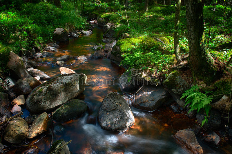 Forest stream royalty free stock photo