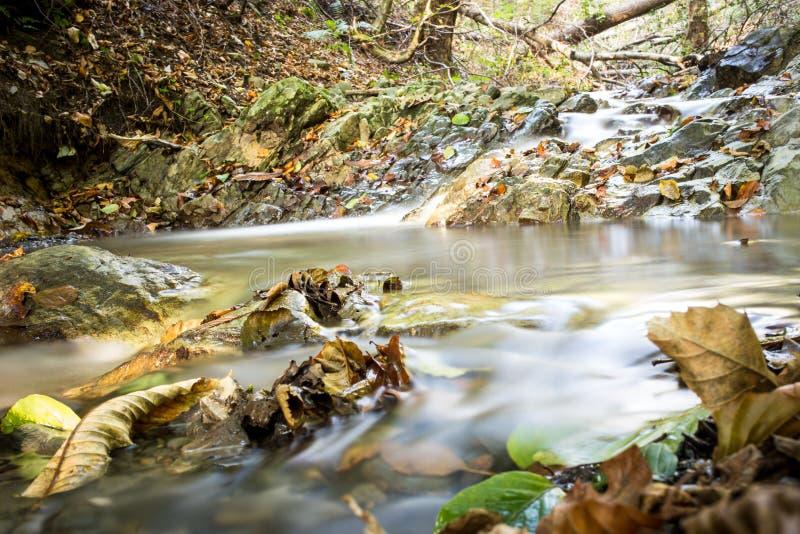 Forest Stream im Herbst stockbilder