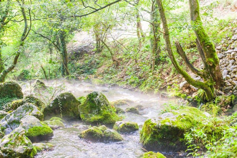 Forest Stream Landscape In Summer-Ochtend royalty-vrije stock foto
