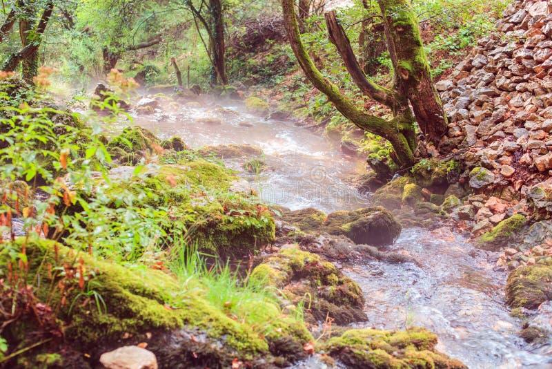 Forest Stream Landscape In Summer-Ochtend royalty-vrije stock foto's