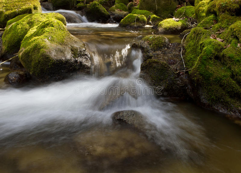 Forest Stream Log Exposure Royalty Free Stock Photo