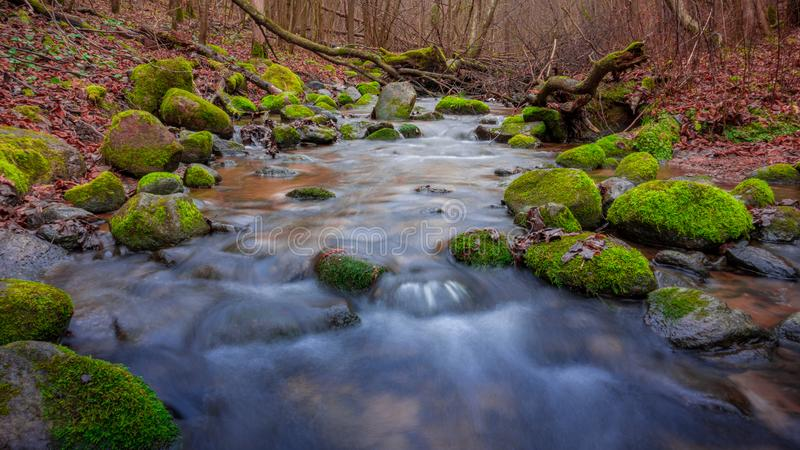 Flowing water of forest stream through stones royalty free stock photo