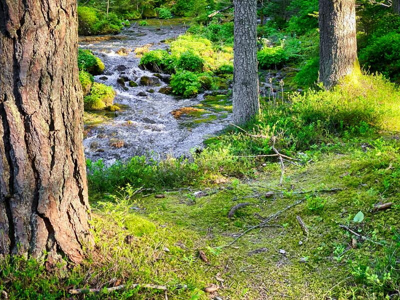 Forest With Stream royalty free stock images