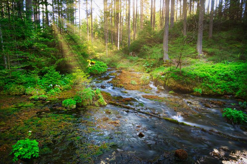 Forest With Stream stock photo