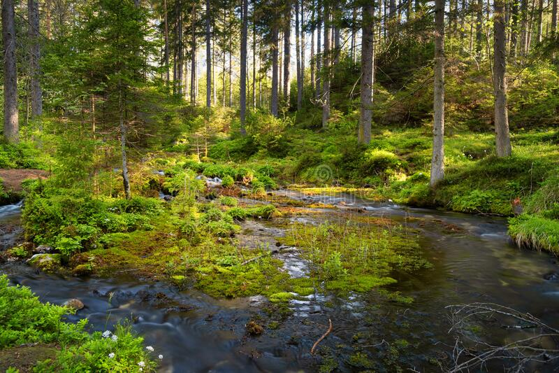 Forest With Stream royalty free stock image