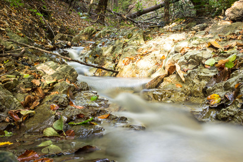 Forest Stream no outono imagens de stock royalty free