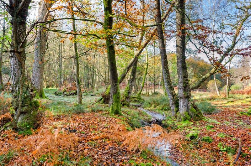 Forest Stream no outono imagem de stock royalty free