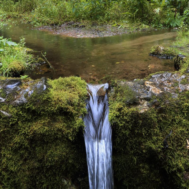 Stream in the forest with waterfall. A small stream in the forest with a waterfall. Valdai, Russia royalty free stock images
