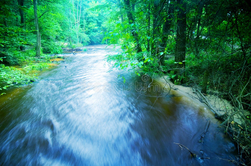 Forest stream running fast royalty free stock image