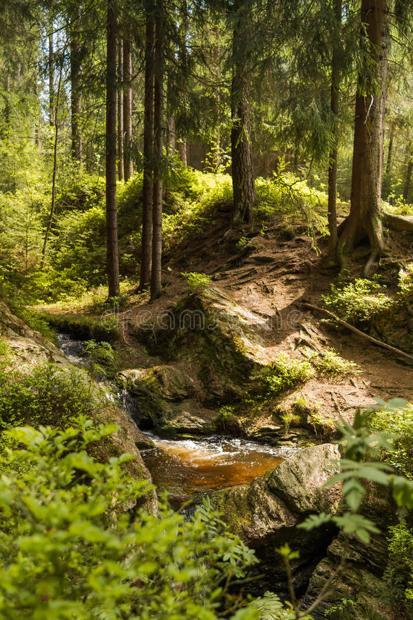 Forest stream in summer stock image