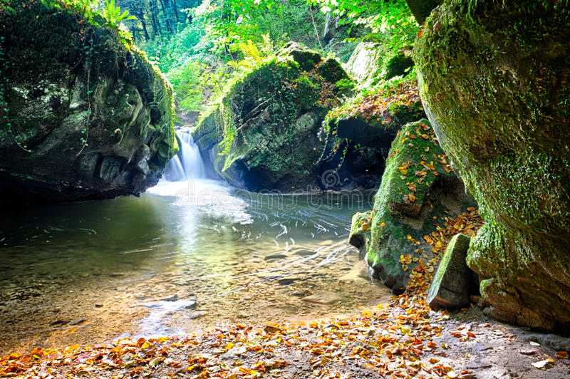 Forest stream at sunny autumn day royalty free stock image