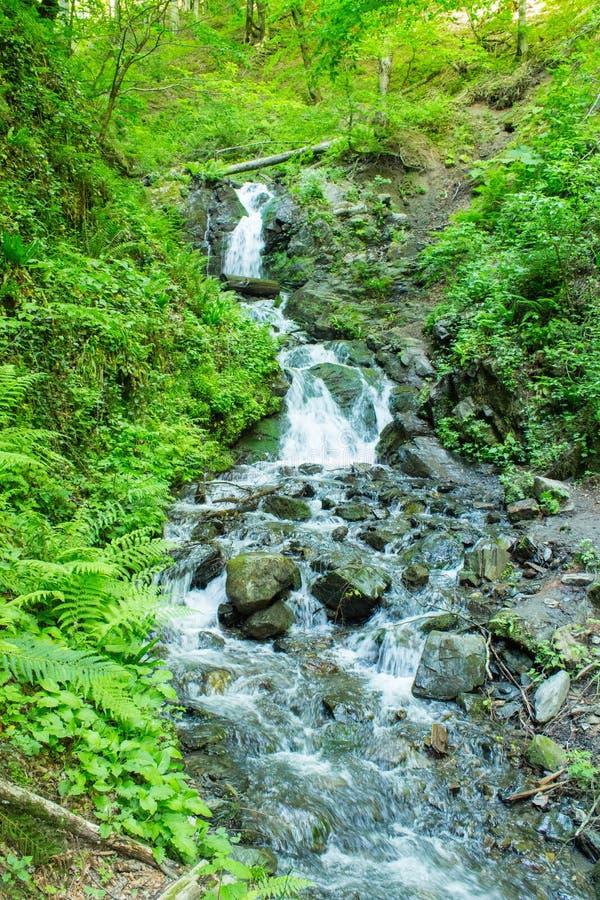 Forest Stream Torrente montano fra il verde Flusso della montagna fra le pietre muscose fotografia stock libera da diritti