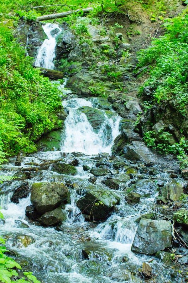 Forest Stream Torrente montano fra il verde Flusso della montagna fra le pietre muscose immagini stock libere da diritti