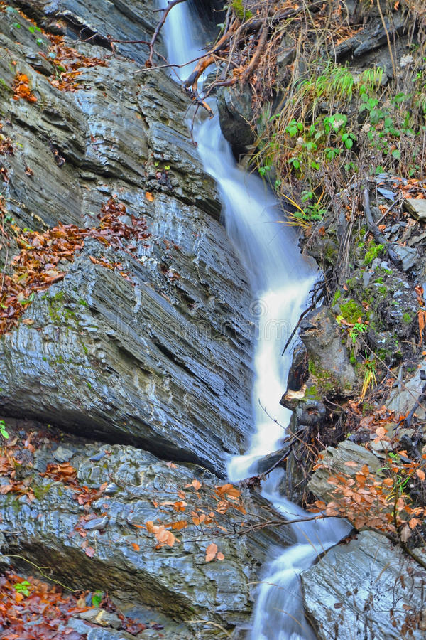 Forest stream waterfall royalty free stock photo