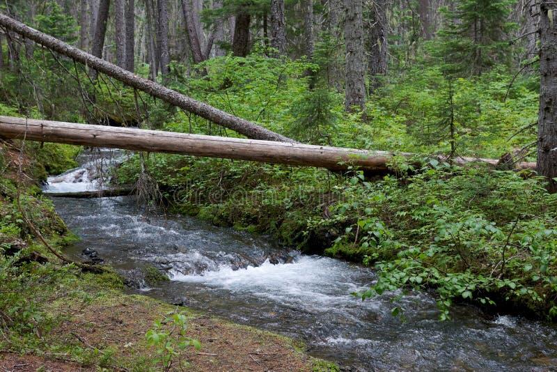Forest Stream Wilderness Canada Green miljö royaltyfri fotografi