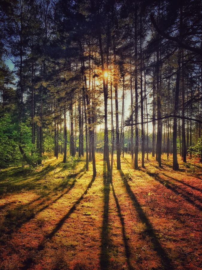 Forest in Poland. Forest in Sulejowek near Warsaw royalty free stock images