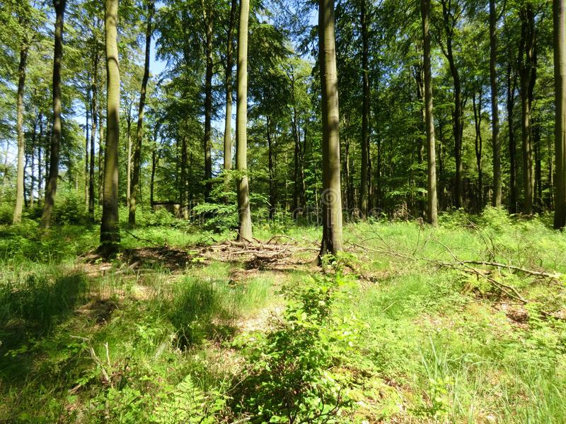 Forest3 стоковые фотографии rf