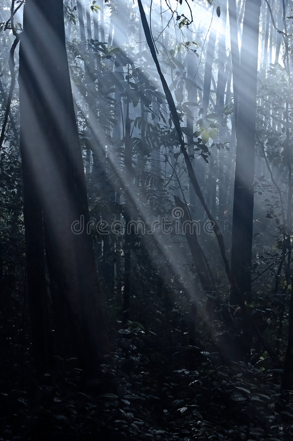 Forest sun royalty free stock image