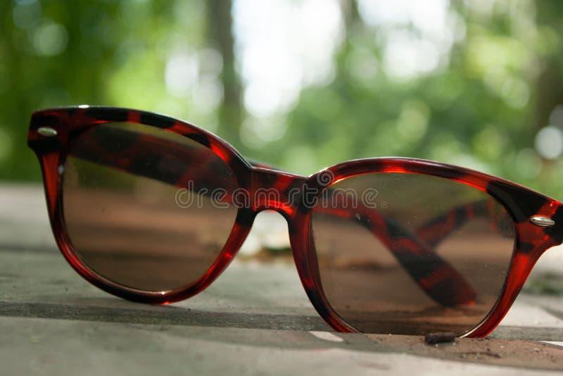 Forest Sunglasses royalty-vrije stock afbeeldingen
