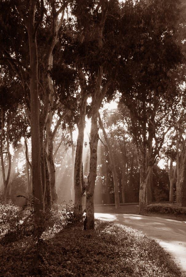 Forest sunlight stock photos