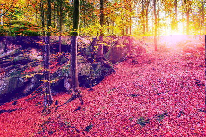 Forest in sunny afternoon while season. Autumn Landscape. Ukrain. E. Europe royalty free stock photos