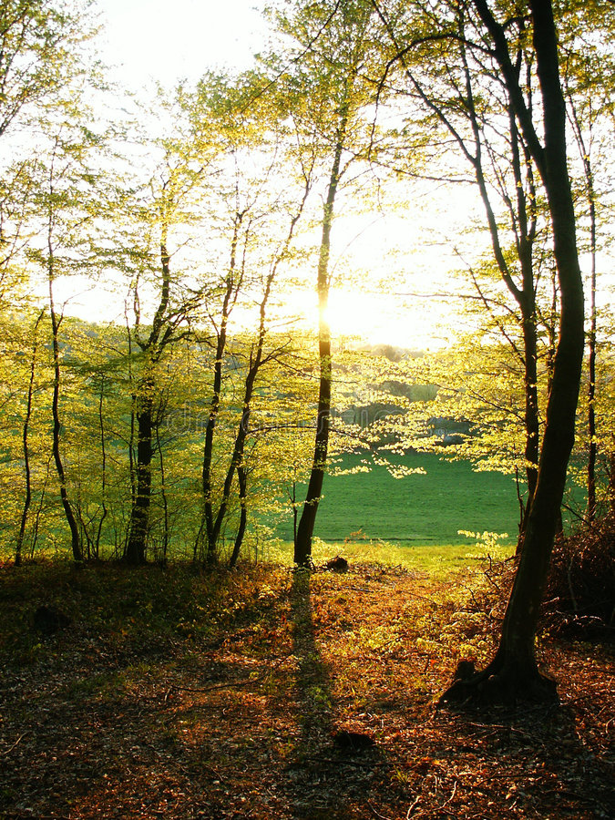Download Forest During Sunny Day 3 Stock Images - Image: 2309534