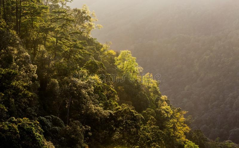 Forest with sunrise stock photos