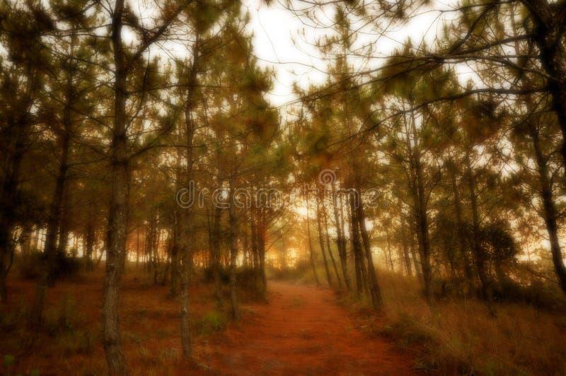 Forest Sunrise im Traum lizenzfreies stockbild