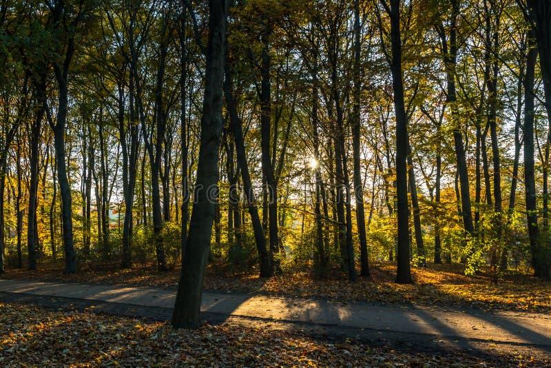Forest Sunset royaltyfri foto