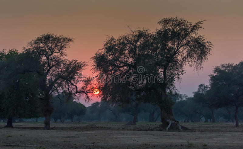 Forest Sunset fotos de stock royalty free