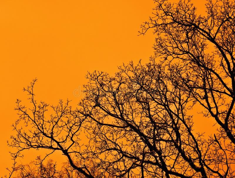 Forest Sunset arkivfoto