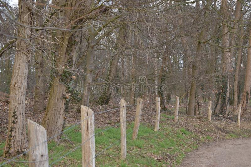 Forest bounded by barbwire fence stock images