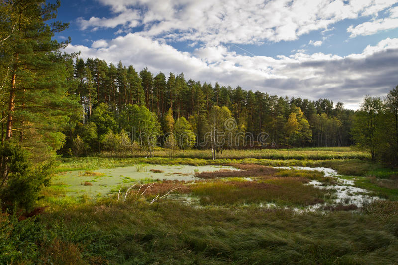 Forest and swamps stock photos