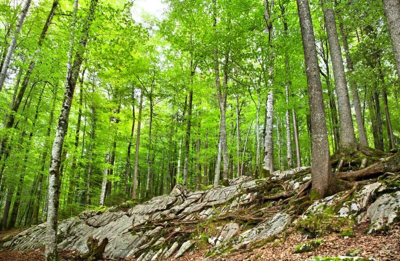 Download Forest in Switzerland stock photo. Image of switzerland - 26457148