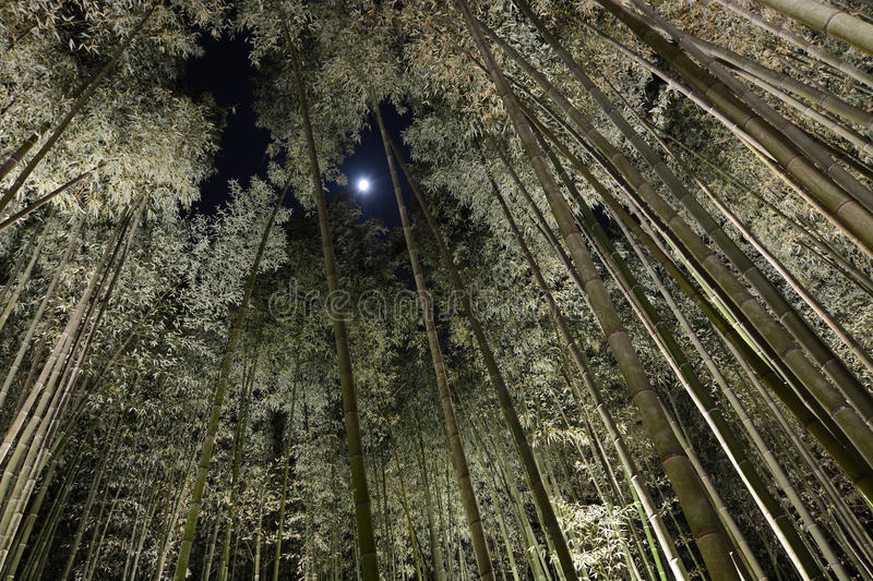 Download Forest Of Tall Bamboo At Night With Moonlight Peering Through A Hole In The Canopy & Forest Of Tall Bamboo At Night With Moonlight Peering Through A ...