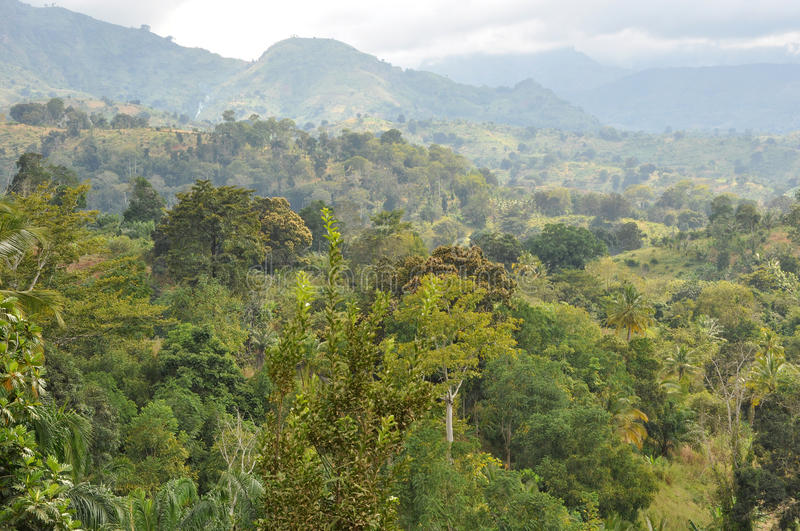 Forest in Tanzania royalty free stock photos