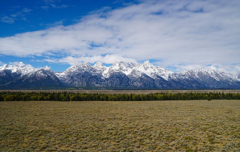 Panorama of the Forest that Grows in Front of the Grand Tetons stock image