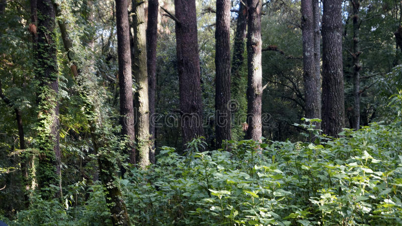 Forest threes stock photography