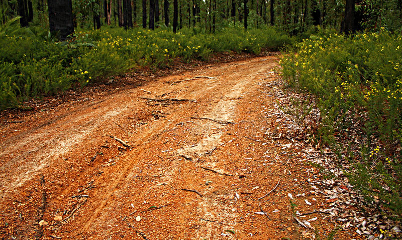 Download Forest Track stock image. Image of vegetation, yellow - 15905187