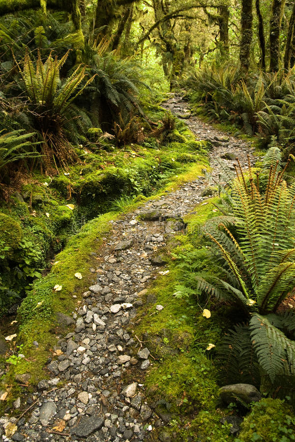 Free Forest Track Stock Photo - 16621990