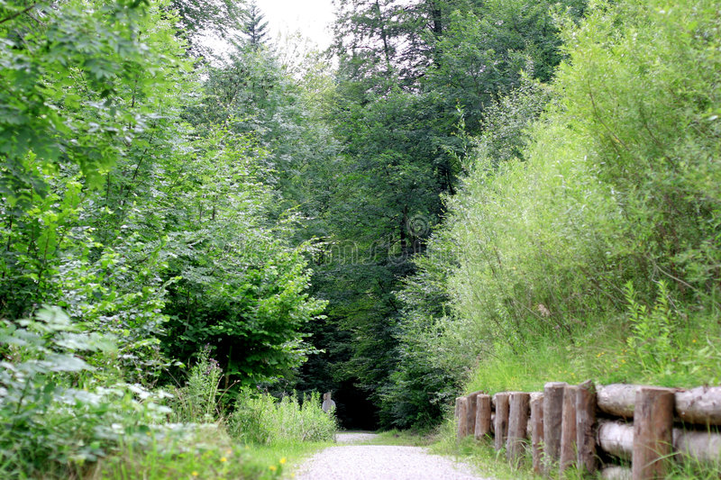 Download Forest Track Royalty Free Stock Image - Image: 180246