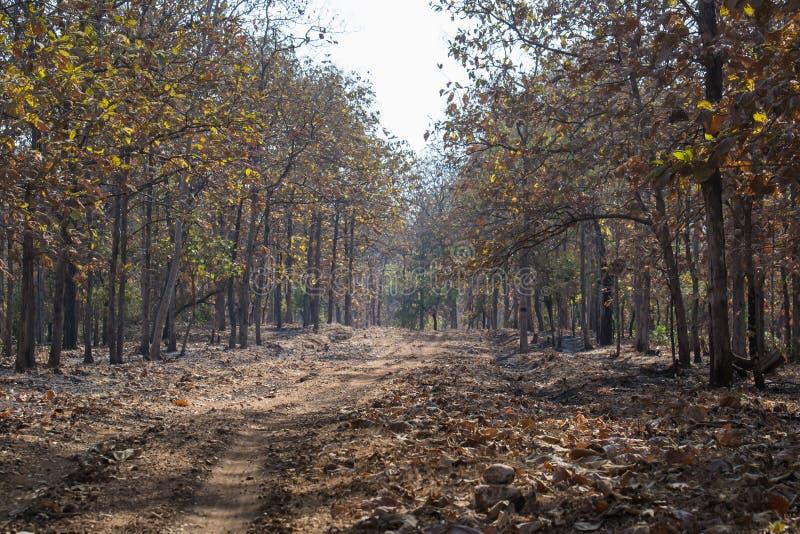 Forest Track av djurlivfristaden royaltyfri fotografi