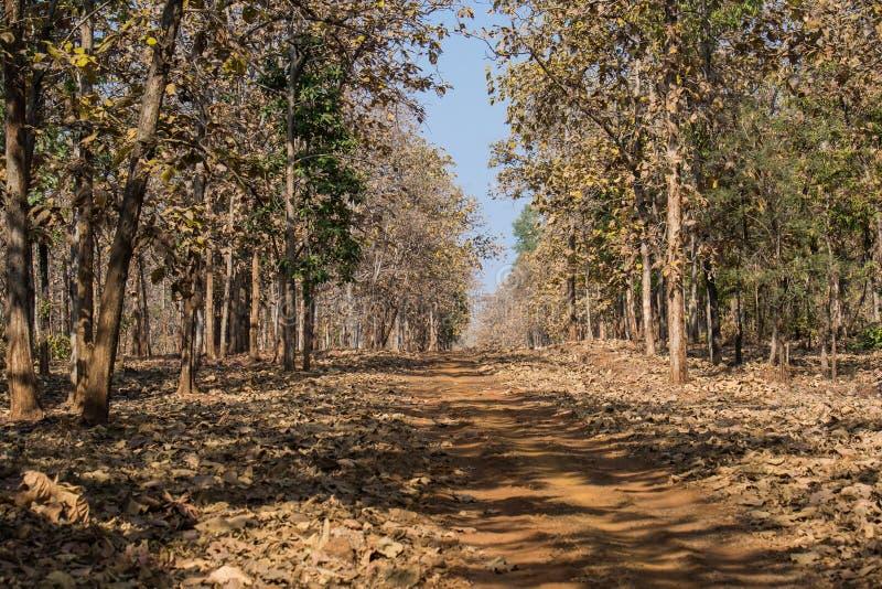 Forest Track av nationalparken i Indien arkivfoto