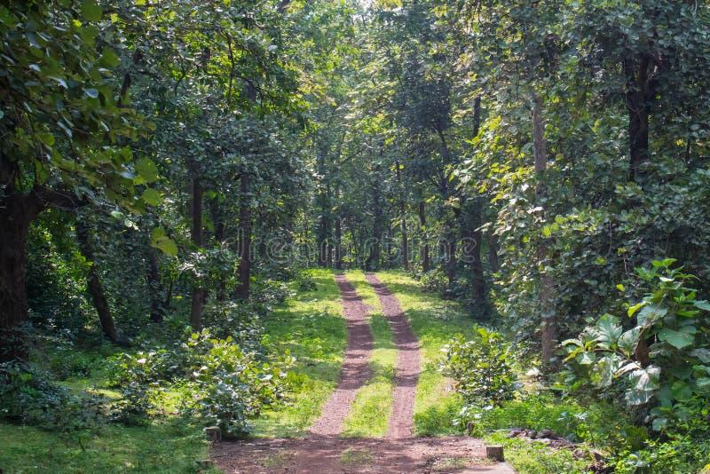 Forest Track av nationalparken i Indien royaltyfria bilder
