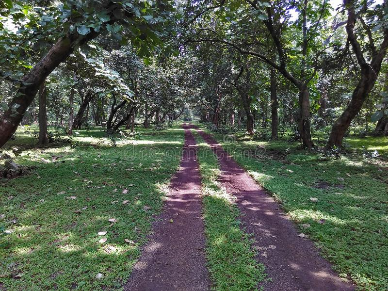 Forest Track van Nationaal Park in India stock foto's